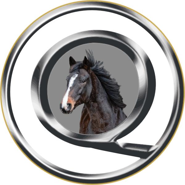 Kristall Experience – Pferdegestütztes BusinessCoaching